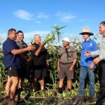 Low Australian dollar allows West Australian corn grower to expand into export market